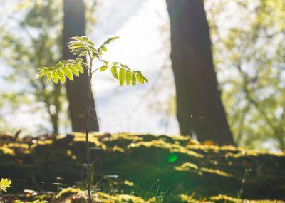 Die kleinen Dinge im Leben - Das Bild zeigt ein Farn von der Sonne bestrahlen
