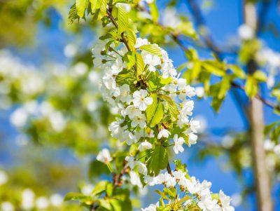 Die kleinen Dinge im Leben - Das Bild zeigt den Anfang des Frühlings