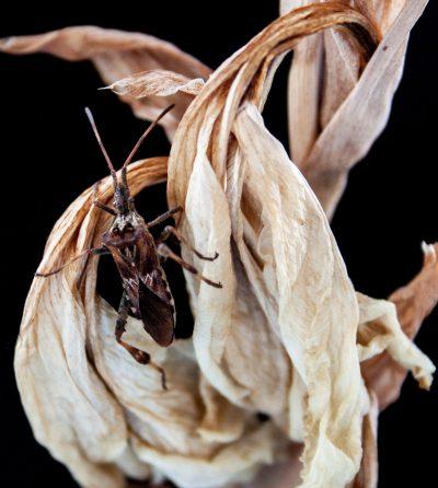 Blatt mit Käfer